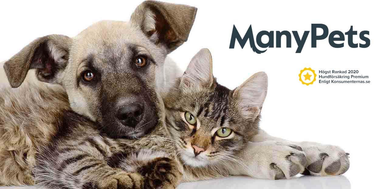 manypets djurförsäkring