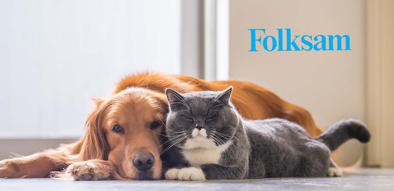 katt och hund folksam