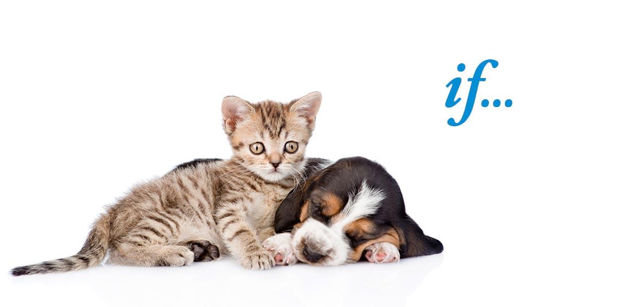 katt och hund if djur