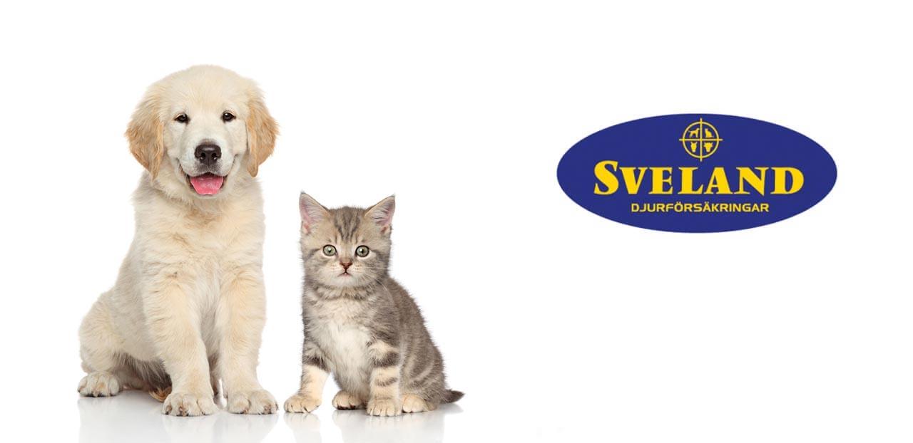 katt och hund sveland